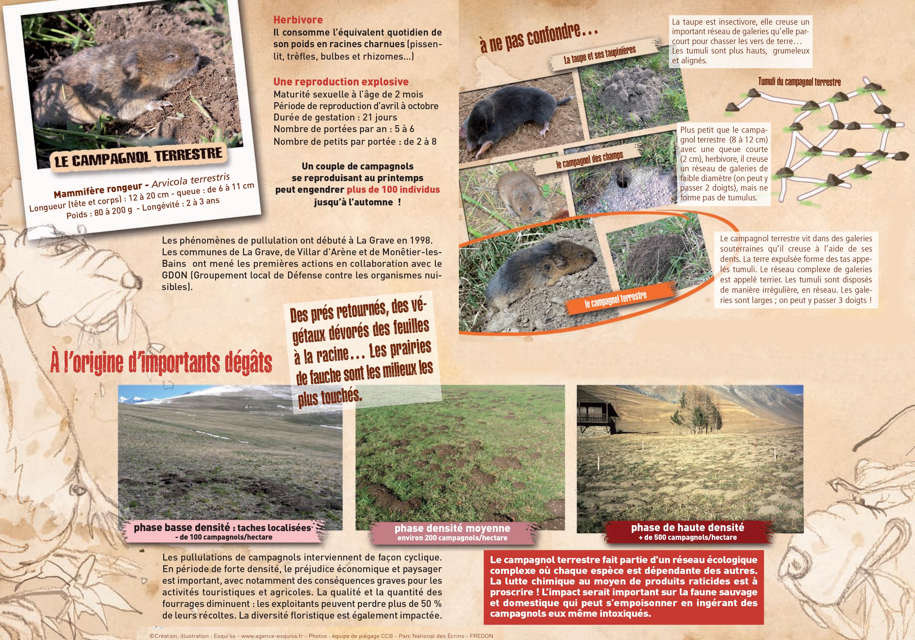 plan_de_lutte_contre_les_campagnols_ccb.jpg